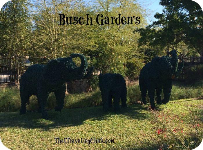 Busch Gardens Tampa Florida Shrub Elephants  #buschgardens #tampaflorida #florida #tampa #amusementpark