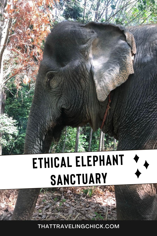 Ethical Elephant Sanctuary #elephant #elephantsanctuary