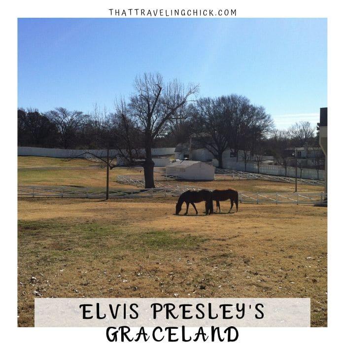 Horses at Graceland #horses #elvisshorses #graceland #elvispresley #tourgraceland #tennessee